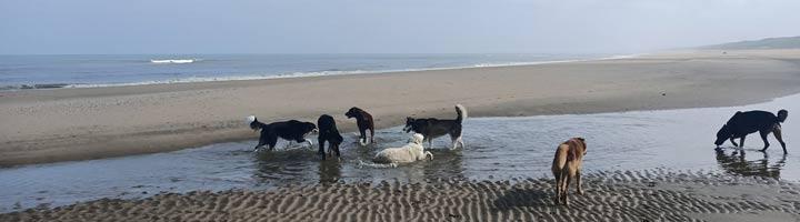 Hondenuitlaatservice Scheveningen Den Haag