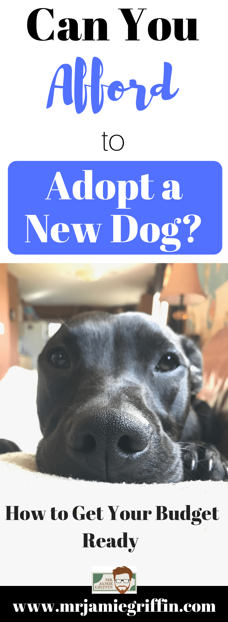 Can You Afford to Adopt a New Dog?