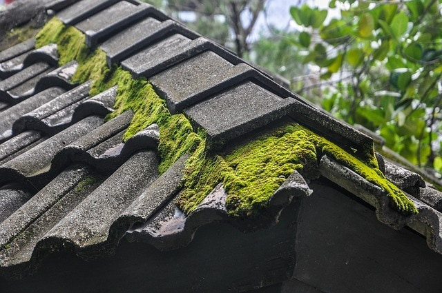 Environmentally Friendly Method to Remove the Moss on the Roof