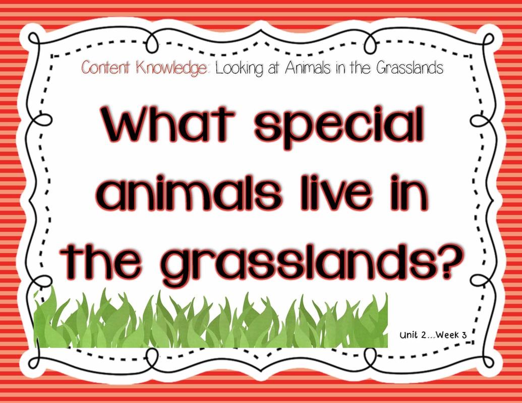 Animal Babies In The Grasslands