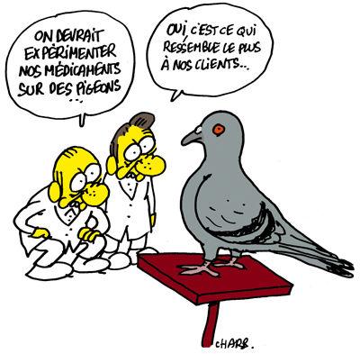 Charlie-Hebdo-Pigeon-by-Charb3