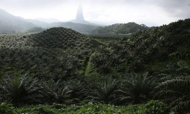 bollore greenpeace2 Déforestation : Greenpeace épingle Vincent Bolloré