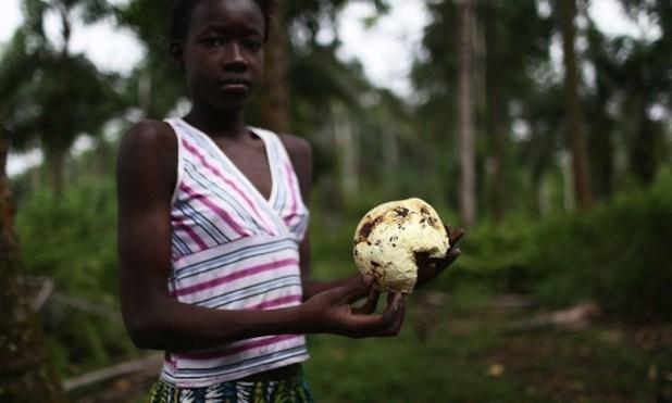 bollore greenpeace3 Déforestation : Greenpeace épingle Vincent Bolloré