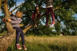 Broniszow, 20.06. 2014. Zabawa na drzewie. Fot. Joanna Mrowka / FORUM