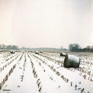 Field photo #11