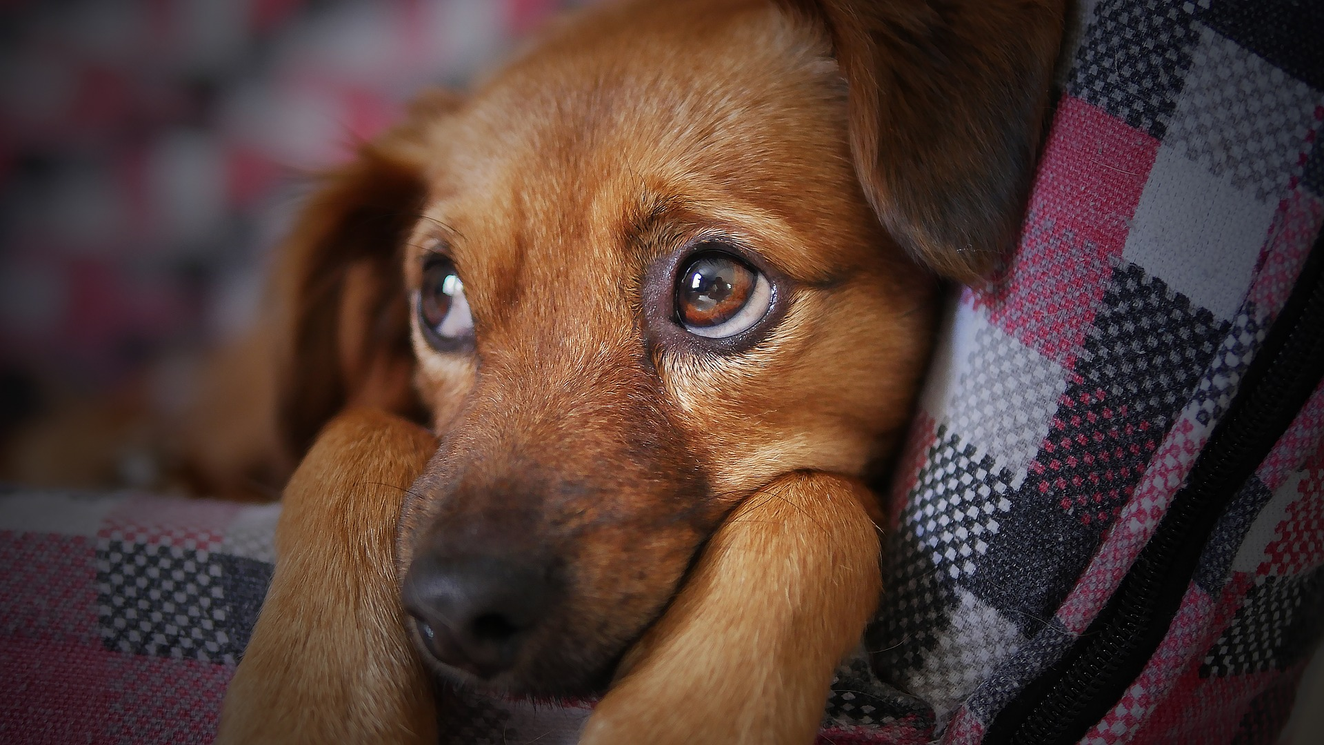 Is Your Pet Reincarnated? Animal Angel Reincarnation, Inspiring Hope for Pet Loss Grief Support