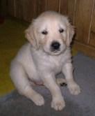 Barnaby, son of Annie, at eight weeks