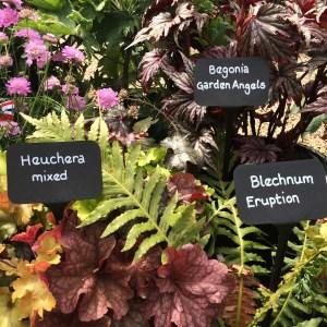 Blechnum, Begonia and Heuchera!