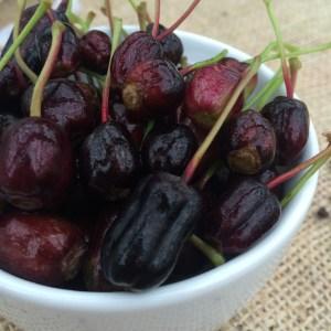 The Fuchsia Berry!
