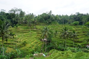 Tegallalang Ricefields in Bali