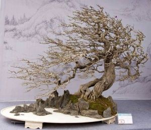Zen Garden Bonsai Windswept Tree