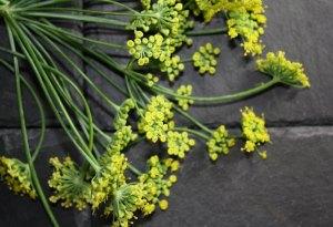 Edible flowers: Fennel Flowers