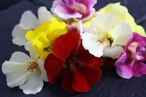Edible flowers: Mimulus