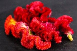 Edible flowers: Velvet Coral