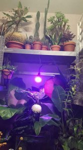 Plant lover: 10 reasons why I love plants so much - growth lamp