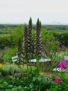 Coastal Garden: Acanthus