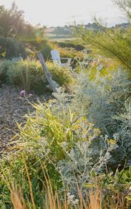 Coastal Garden: Grasses