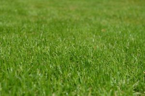 Gardening jobs: Apply lawn feed