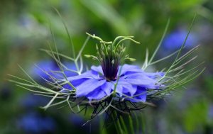 Gardening jobs: Sow annuals direct