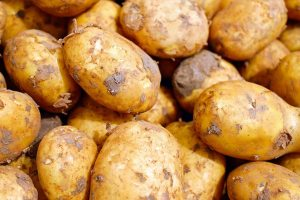 Gardening jobs: Plant potatoes