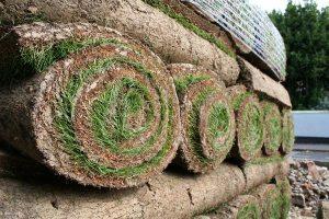 Gardening jobs: Lay turf