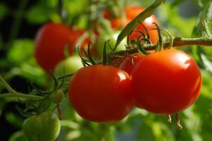 Gardening jobs for July: Train tomatoes