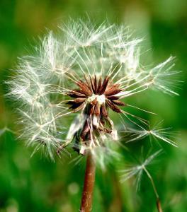 Gardening jobs for June: Weeding