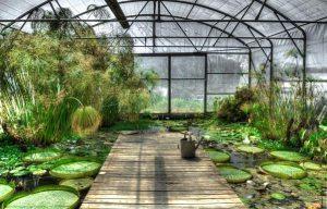 Gardening jobs: Ventilate greenhouse