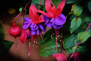 Gardening jobs for October: Pot on cuttings