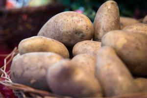 Gardening jobs for September: Harvest potatoes