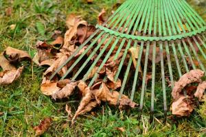 Gardening jobs for September: Scarify
