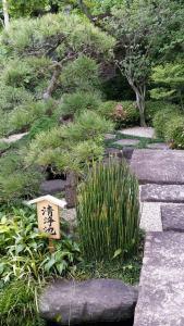 Japanese Plants: Horsetail