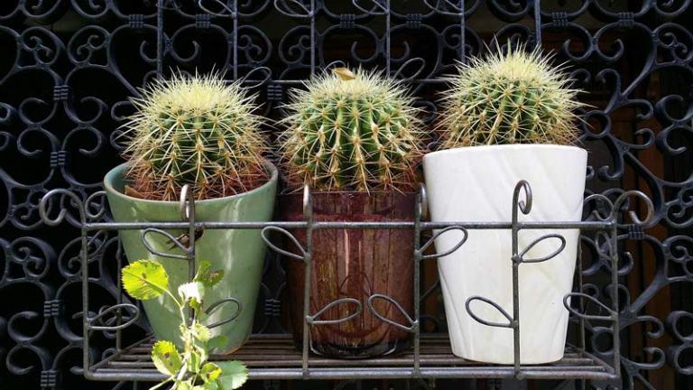 Japanese Plants: Street plants