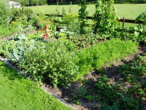 Grow your own fitness: Allotment