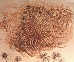Drawing of a botanical study by Leonardo da Vinci