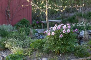 Backyards of the World: Tommy Tonsberg, Norway