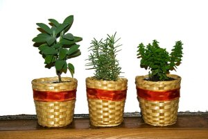 Plants for kids: Herbs