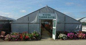 The National Pelargonium Collection