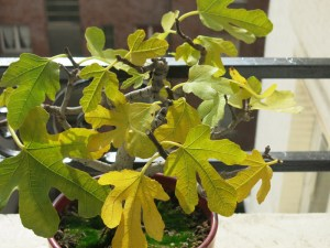 5 biggest plant care mistakes