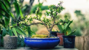Could gardening be your ikigai?