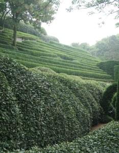 Mazes in Les Jardins d'Etretat, Normandy