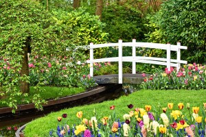 Garden design: 5 tips before you begin