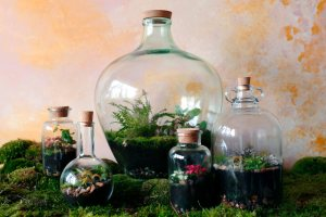 London Terrariums - RHS London Urban Garden Show 2018