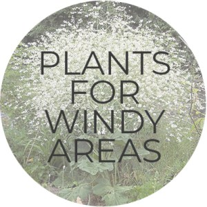 Plants for Windy Areas | Plant Guide