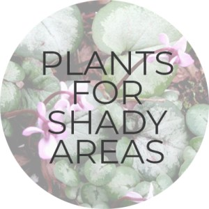 Plants for Shady Areas | Plant Guide