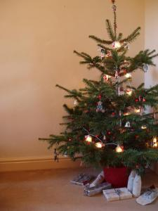 Keeping your Christmas tree healthy