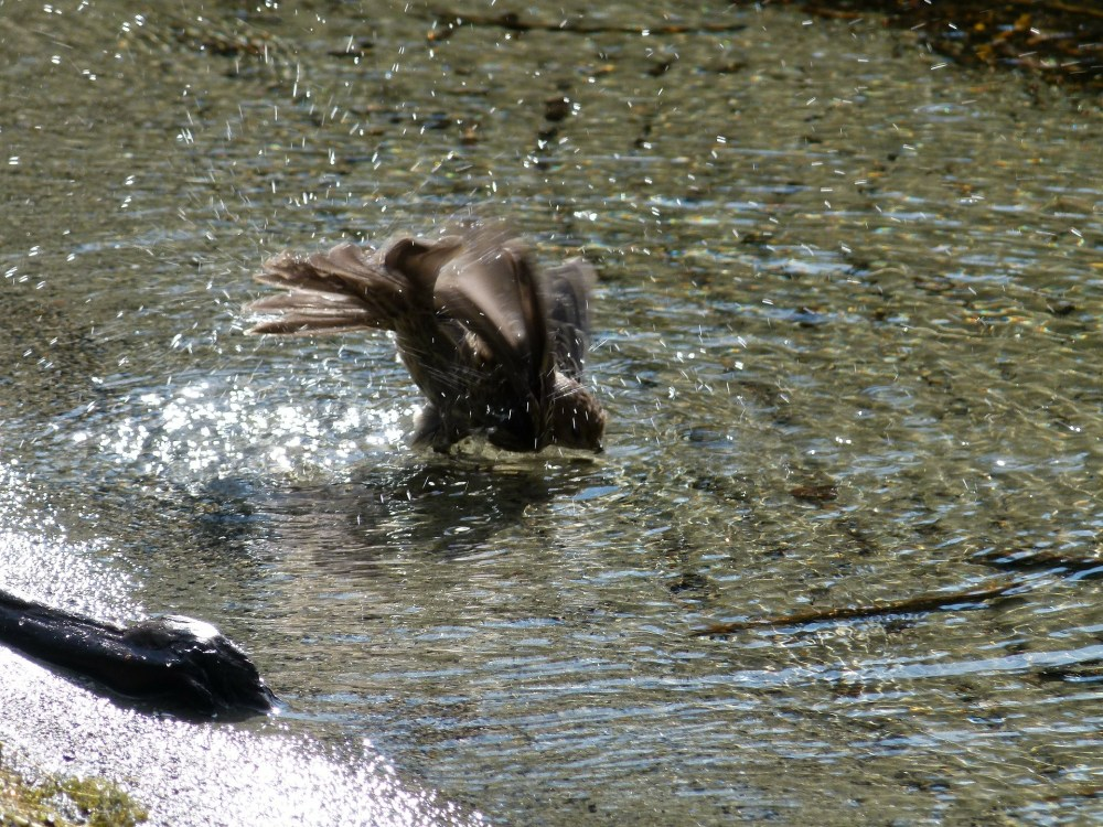 Bird Care: Bernini Bird Bath and Water Feature
