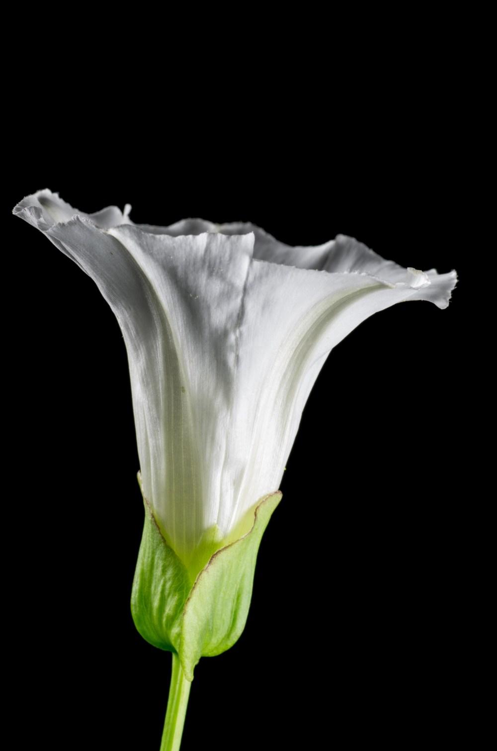 Bind Weed by Marius Grose