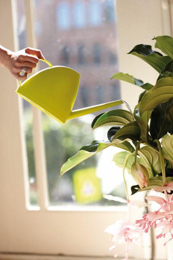 Plant care for beginners by Tahío Avila