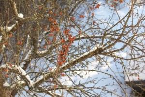 Seasonal Gardening:  Winter wash trees